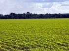 Plantio da safra 2012/13 de soja em Mato Grosso é encerrado