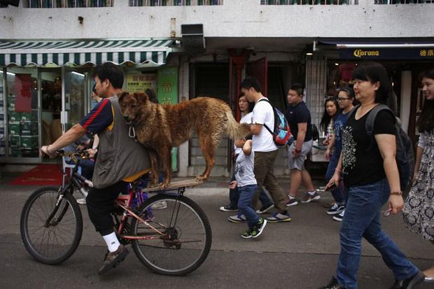 Um cão foi flagrado andando na garupa de uma bicicleta na ilha de Cheung Chau, em Hong Kong, na China, durante o festival Bun (Foto: Bobby Yip/Reuters)