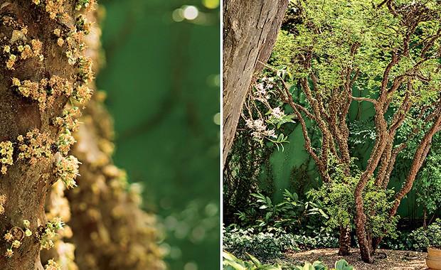 frutíferas (Foto: Casa e Jardim)