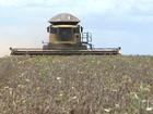 Safra de grãos deve ficar 9,8% menor em 2016, estima IBGE