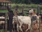 Trio é preso por furto de gado em Monte Aprazível