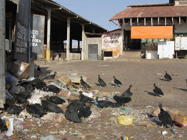 Feira da Cidade Operária, em São Luís, tem sérios problemas sanitários (Foto: De Jesus/O Estado)