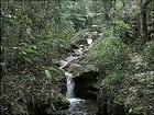 Serra do Japi é referência em biodiversidade no interior de SP