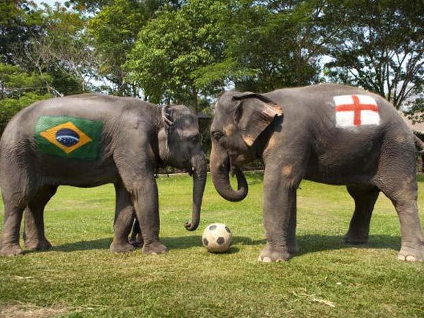 O elefante chamado 'Duanpen' teve pintado em seu corpo a bandeira da Inglaterra, enquanto a fêmea 'Thongsri' foi escolhida para defender as cores do Brasil.  (Foto: Bronek Kaminski/Barcroft Índia/Getty Images)