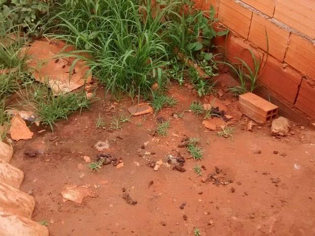Cadela morre por maus-tratos em Uberlândia  (Foto: Polícia Militar de Meio Ambiente/Divulgação)