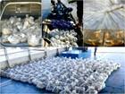 PF prende homens e apreende mais de 2 mil peixes ornamentais no AM