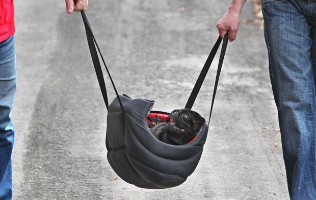 Dentro de bolsa, pug leva 'vida de rei' ao ser carregado pelos donos (Foto: Karl-Josef Hildenbrand/AFP)