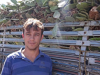 Vendedor traz palma de Alagoas para abastecer o que resta do rebanho em Pernambuco (Foto: Luna Markman / G1)