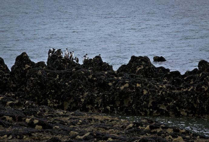 As lindas praias que as gravações aconteceram eram habitadas por pinguins  (Foto: Gabriel Nascimento/Gshow)