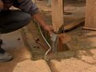 Técnicos tentam sanar problema de água contaminada em cidade de MT