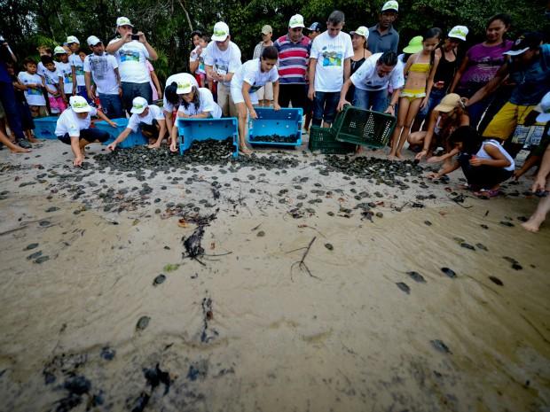 No Amazonas, atualmente, existem cerca de 138 áreas de reprodução de quelônios, em 10 calhas de rio, que recebem algum trabalho de proteção (Foto: Alex Pazuello/Agecom)