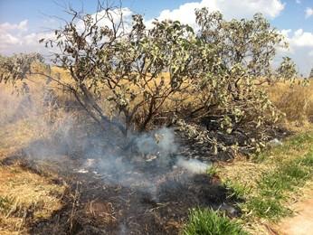 Algumas manifestantes chegaram a atear fogo em partes da vegetação (Foto: Willian Farias/ G1)