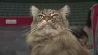Santos recebe exposição de gatos de raça