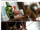 'Esquilo-ajudante' é flagrado em restaurante de Monte Verde, MG