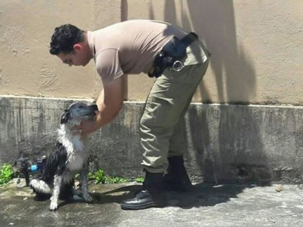 Cão recebeu banho de mangueira de policiais (Foto: Polícia Militar/Divulgação)