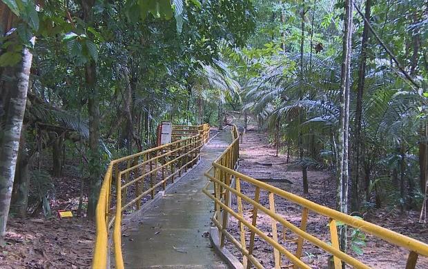 Trilhas que já existem passarão por limpeza e revitalização (Foto: Amazônia TV)