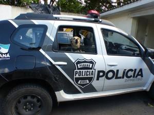 Cachorro acompanha os policiais na viatura (Foto: Thais Skodowski/ G1)