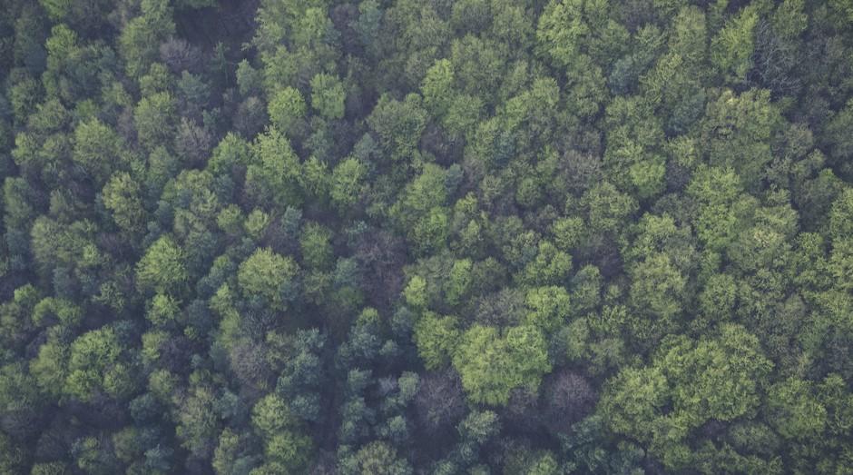 Floresta, mata, selva, natureza (Foto: Reprodução/Pexel)