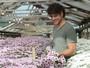 Sangue Bom: Marco Pigossi grava cercado por flores nova novela em SP