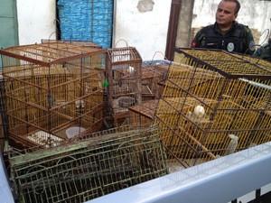Aves foram apreendidas no Porto de João Tota, em João Pessoa (Foto: Walter Paparazzo/G1)