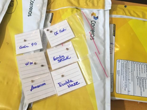 Homem é preso ao tentar enviar sementes de maconha pelos Correios em Goiânia, Goiás (Foto: Vitor Santana/G1)