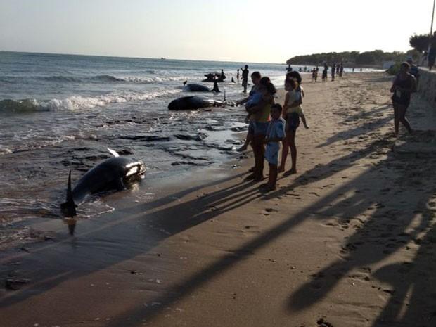 Baleias encalharam na praia de Upanema neste domingo (22) (Foto: Divulgação/PM)