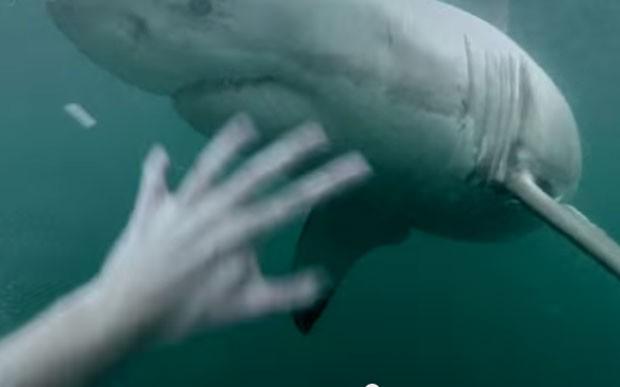 Vídeo bombou na web após usuário alegar que registrou encontro impressionante com tubarão branco na Austrália (Foto: Reprodução/YouTube/Terry Tufferson)