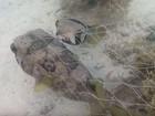 Peixe não abandona companheiro que ficou preso em rede de pesca