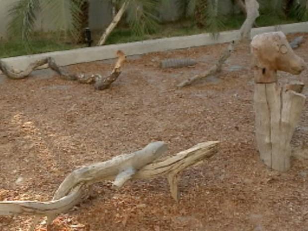 Lagartos feitos de madeira (Foto: Reprodução/TV Grande Rio)