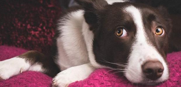 cachorro-home (Foto: Thinkstock)