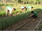 Conselho das escolas agrícolas do AP suspende aulas por falta de recursos
