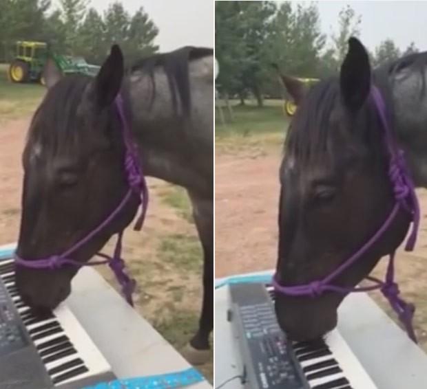 Cavalo fez sucesso na internet ao ser filmado tocando teclado (Foto: Reprodução/YouTube/DEEandSAPPHIRE)