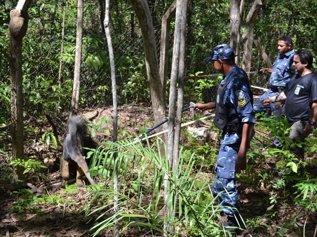 Tamanduá foi encontrado dentro de uma cisterna no lago de Palmas (Foto: Divulgação/GMP)
