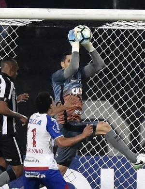 gatito botafogo bahia (Foto: André Durão / GloboEsporte.com)