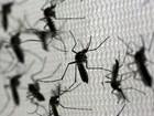 Infestação do Aedes aegypti bate recorde em Pernambuco