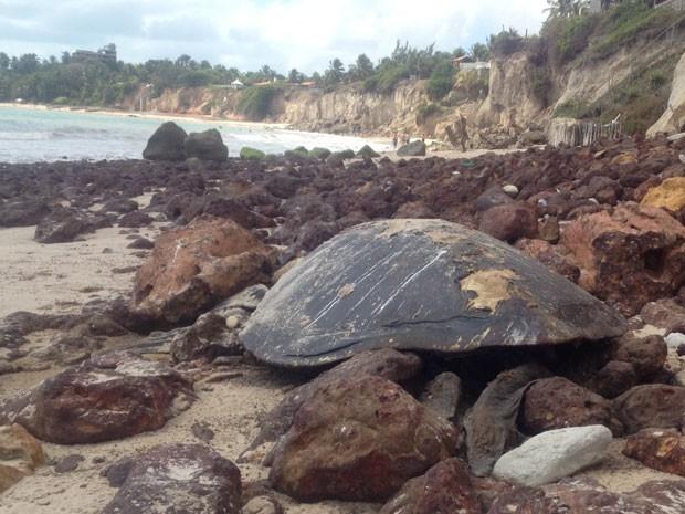 Uma outra tartaruga foi encontrada na praia de Jacumã, no Litoral Sul da Paraíba, no domingo (Foto: Walter Paparazzo/G1)