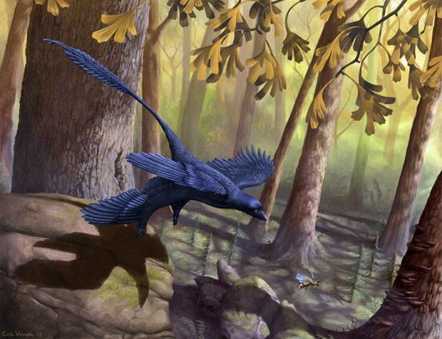 Ilustração divulgada por estudiosos mostra dinossauro microraptor durante voo (Foto: Divulgação/Emily Willoughby)