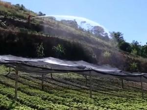 Horta na propriedade do Gilberto Souza, em Barra Mansa, RJ (Foto: Reprodução/TV Rio Sul)
