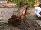 Vento teve velocidade de um furacão em Porto Alegre, diz meteorologista