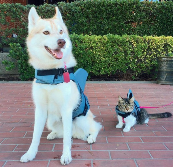Gata Rosie e a cadela Lilo (Foto: Reprodução/Facebook)