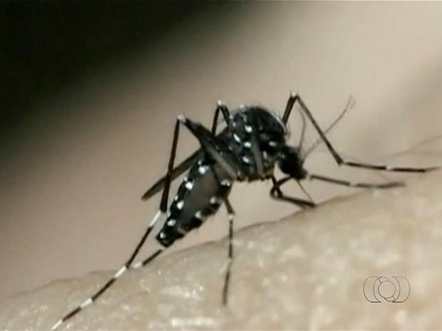 Até o momento, seis casos de Zika foram confirmados, outros 200 casos suspeitos estão sendo investigados pela Sesau (Foto: Reprodução/TV Anhanguera)