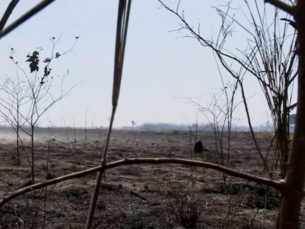 Fogo destruiu parte de área de proteção ambiental (Foto: Reprodução / TV TEM)