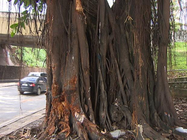 Árvore (Foto: Imagem/ TV Bahia)