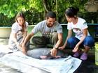 Após mãe ser morta no AM, filhote de peixe-boi é salvo em local de abate