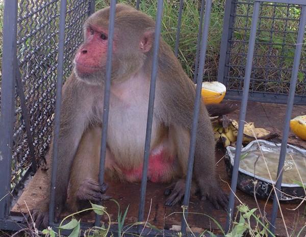 Macaco encontrado às margens da BR-104 (Foto: Divulgação/ Polícia Civil)