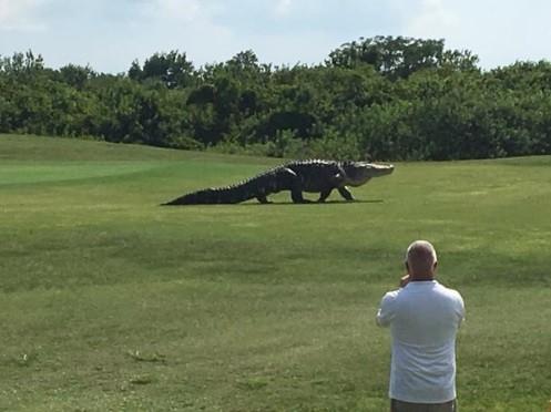 Intruso no clube de golfe