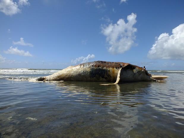 baleia encalha em morro de são paulo (Foto: Rota Tropical / Arquivo Pessoal)