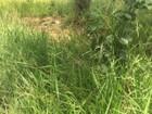 Corpo é encontrado em terreno baldio por moradora de Campo Grande