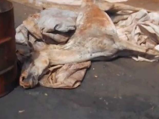 Cavalo teve que ser sacrificado em rua de Jaboticabal (Foto: Ricardo Alexandre Miciano)