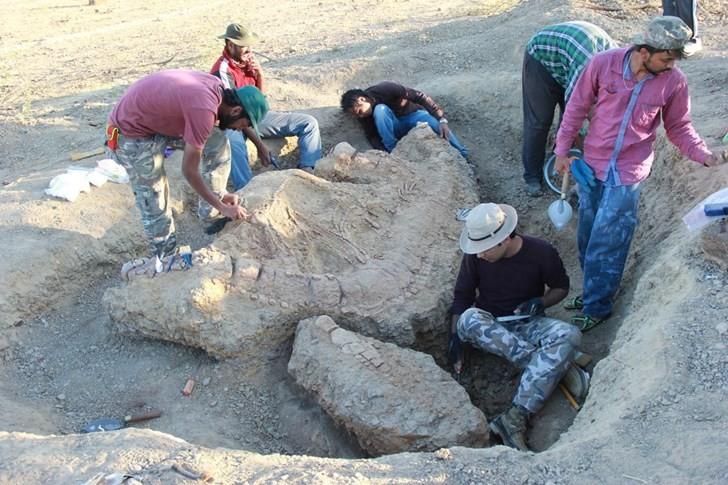 Pesquisadores escavam fóssil (Foto: Guntupalli V.R. Prasad)